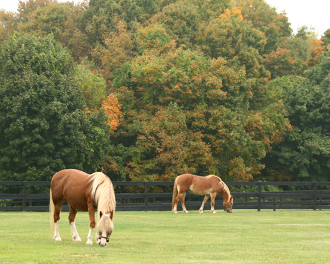 The Mid-September view of the horse paddocks.