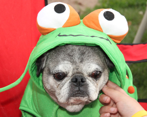 Toby the frog